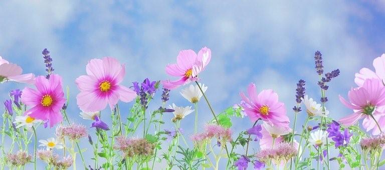Commande de Fleurs & Plants de légumes